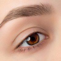 eye-brow-wax-and-tint